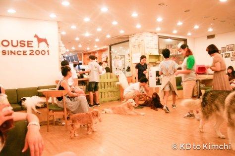 Bau House Puppy café  (Hongdae)