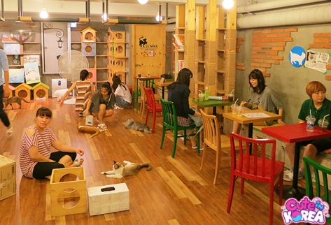 Cat Attic (Hongdae)